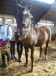 karnevalscup20110042
