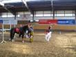 karnevalscup20110065
